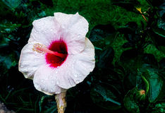 Fleur blanche prise par l'iphone 5 photo libre de droits