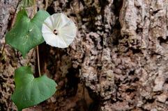 Fleur blanche sur la roche Photos stock