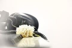 Fleur blanche sur le clavier de paino Photos libres de droits