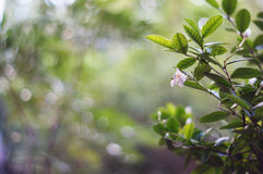 Fleur blanche sur le fond de bokeh Image stock