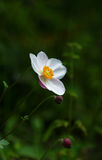 Fleur blanche sur le fond vert photo stock
