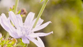 Fleur blanche sur le pré banque de vidéos