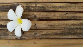 Fleur blanche sur le vieux bois en bambou Photographie stock libre de droits