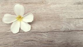 Fleur blanche sur le vieux fond en bois Photographie stock libre de droits