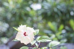 Fleur blanche sur un fond vert brouillé Images stock