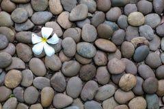Fleur blanche tombée sur le fond en pierre de plancher Image libre de droits
