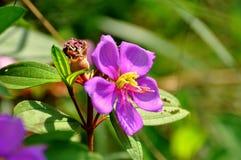 Fleur bleue image libre de droits