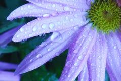 Fleur bleue Images libres de droits