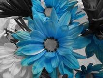 Fleur bleue Photos libres de droits