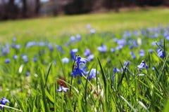 Fleur bleue images stock