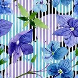 Fleur bleue de Veronica d'aquarelle Fleur botanique florale Modèle sans couture de fond photos libres de droits
