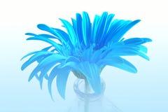 Fleur bleue en brouillard bleu photographie stock
