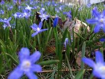 Fleur bleue lumineuse photo libre de droits