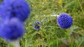 Fleur bleue lumineuse et intéressante images stock