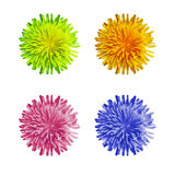 Fleur bleue, rose, verte et orange de pissenlit, vue supérieure Image stock