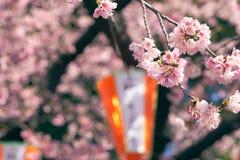 Fleur blossomCherry de cerise rose, cerise fleurissante japonaise sur l'arbre de Sakura Les fleurs de Sakura sont représentant de Images stock