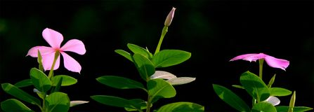 Fleur bonjour Images libres de droits