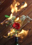 Fleur Branche dans la bouteille avec le feu image libre de droits