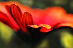 Fleur brouillée par couleurs vives abstraites de fond Images stock