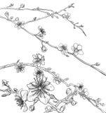 Fleur Cherry Peach Flowers Background Pattern illustration de vecteur