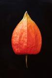 Fleur chinoise #2 de lanterne Image libre de droits