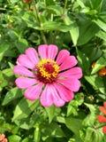 Fleur colombienne Photographie stock libre de droits