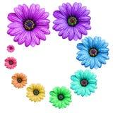 Fleur colorée Photographie stock