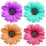 Fleur colorée Photographie stock libre de droits