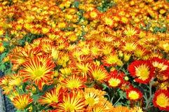 Fleur colorée Images libres de droits