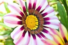 Fleur colorée Photo stock