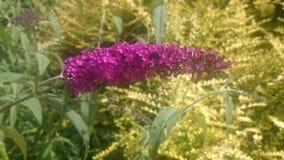 Fleur colorée Image libre de droits