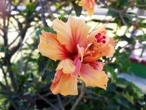 Fleur colorée Images stock