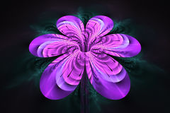 Fleur colorée abstraite sur le fond noir Image libre de droits