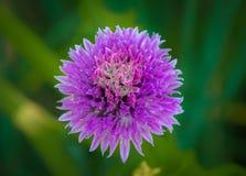 Fleur colorée aux jardins botaniques de NY Image stock