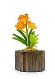Fleur colorée d'orchidée d'argile Photographie stock