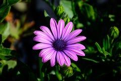 Fleur colorée dans le plein boom Images libres de droits