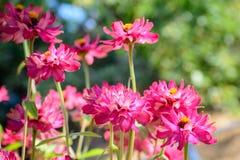 Fleur colorée dans le plein boom Photo stock