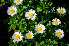 Fleur colorée dans le plein boom Images stock