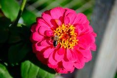 Fleur colorée dans le plein boom Image stock