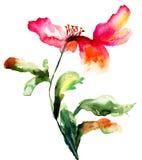 Fleur colorée de pavot Photo libre de droits