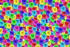 Fleur colorée de rose Photo libre de droits