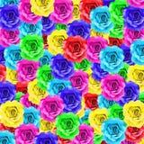 Fleur colorée de rose Photos stock