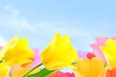 Fleur colorée de tulipe de ressort à l'arrière-plan de ciel avec l'espace de copie des textes Image libre de droits
