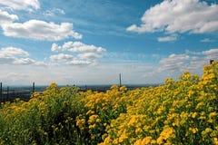 Fleur colorée en tant que d'abord signe de ressort, Allemagne Images stock