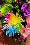 Fleur colorée par arc-en-ciel dans le bouquet brillamment coloré des fleurs fraîches - vue supérieure image stock