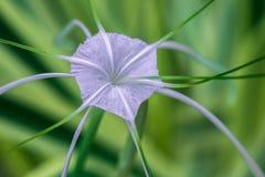 fleur comme des étoiles de mer Image libre de droits
