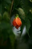 fleur comme une lampe Photo stock