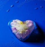 Fleur congelée à l'intérieur de coeur de glace Photos stock