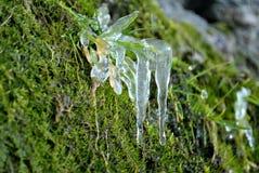 Fleur congelée images libres de droits
