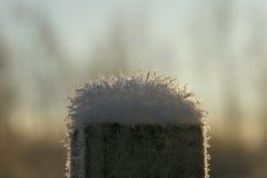 Fleur congelée sous la neige Photos libres de droits